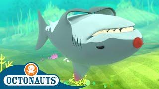 Octonauts - Peaceful Great White | Cartoons for Kids | Underwater Sea Education