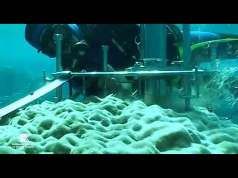 Coral Cores - windows into past climate