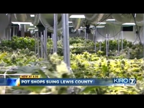 3 Legal Licensed Cannabis Businesses Suing Washington State For NOT Being Allowed To Do Business!
