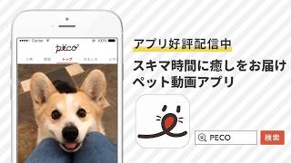 ペット動画を楽しむならPECO!□□□ 月間500万人が見ているペット動画・画...