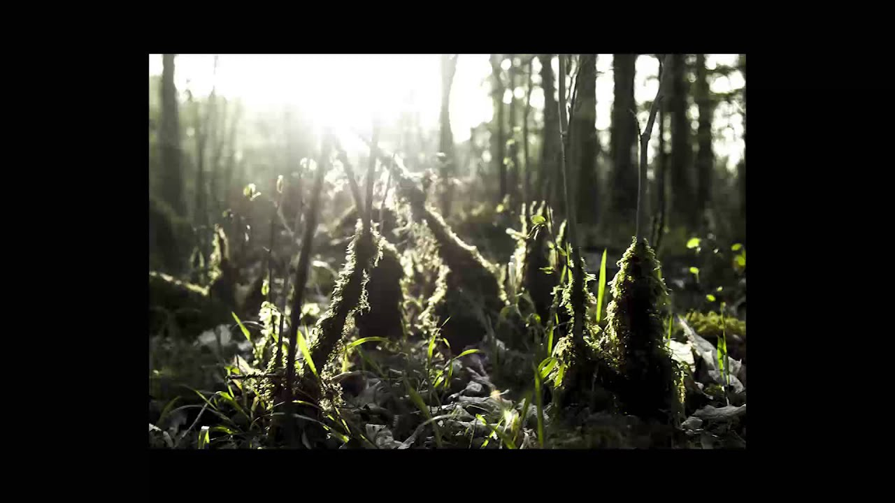 Timber Timbre Lay Down In The Tall Grass Live Youtube