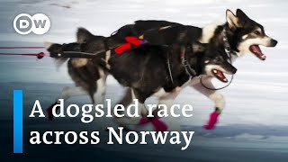 Europe's toughest dogsled race | DW Documentary