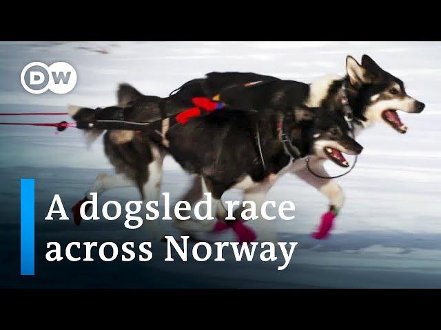 Europe's toughest dogsled race   DW Documentary