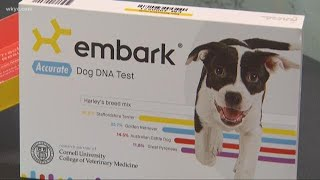 Bark Week: What kind of dog do you have? We put doggie DNA to the test