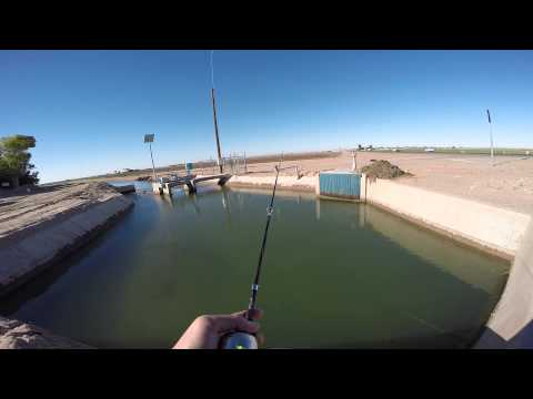 Arizona Bass Fishing