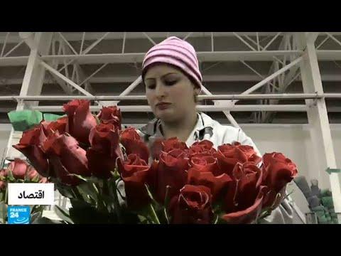 عيد الحب.. فرصة للعمل لإنتاج المزيد من الورود  - 15:23-2018 / 2 / 14