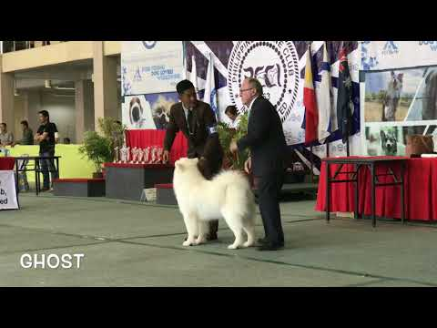 PCCI All Breed Championship Dog Show