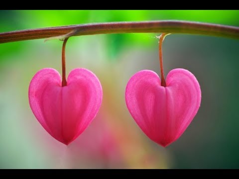 Angel of Love Messages for New/Past Partners - Twin Flame/Soulmate/Divine Connections