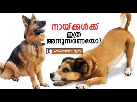 Sajan Cyriac's Dog Breeding & Training | Haritham Sundaram | Kaumudy TV