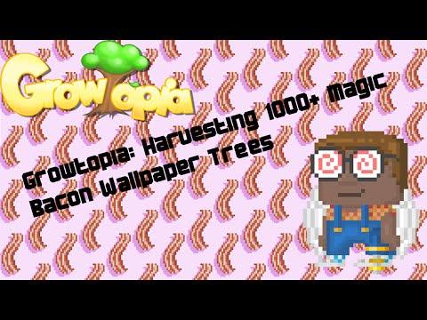 Growtopia Harvesting 1000 Magic Bacon Wallpaper Trees