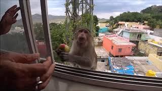 37. И снова здрасьте... Гость в окне.  Мой ужин, только подумала и получила ответ в комментарии...