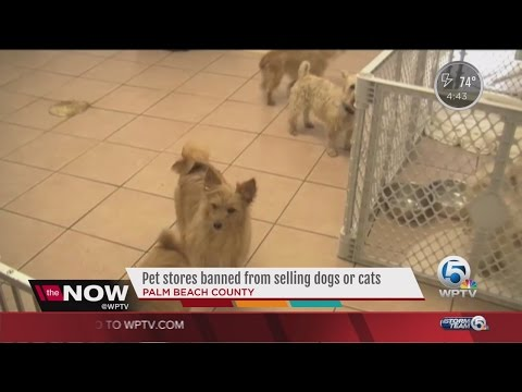 Pet store west palm beach florida