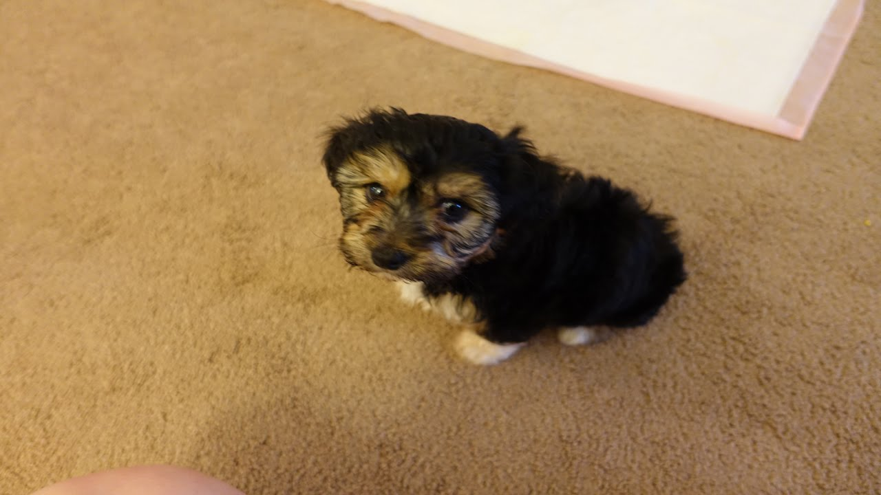 FaZe Puppy - YouTube