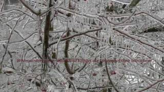 O Christmas Tree (O Tannenbaum - Mon Beau Sapin)