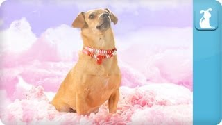 Katy Perry - California Gurls (ft Snoop Dog) - Katy Puppy - California Grrrs / Wide Awoof - Petody