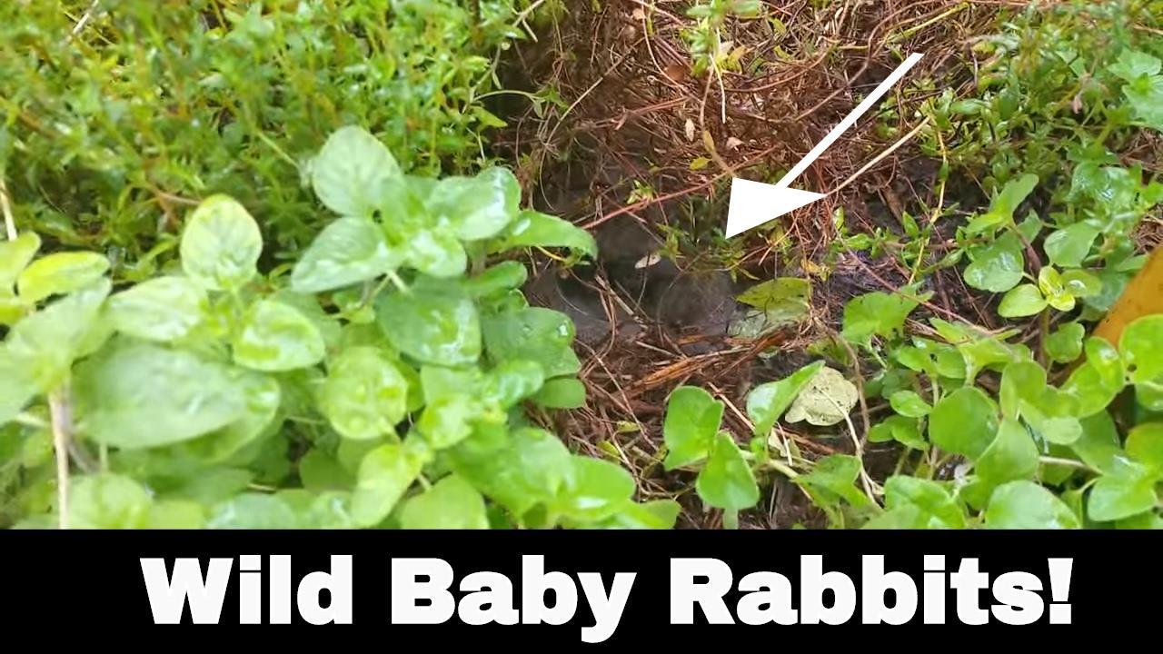 I Found Wild Baby Rabbits in My Yard! - YouTube