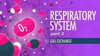 Respiratory System, part 2: Crash Course A&P #32