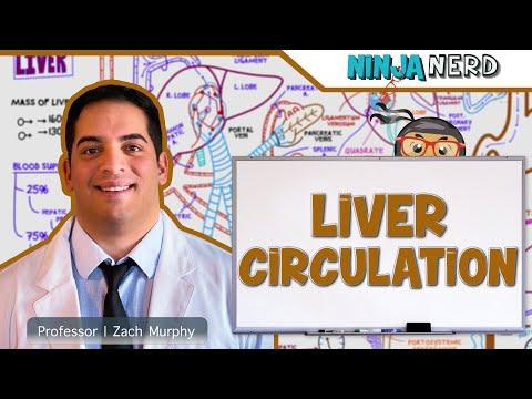 Gastrointestinal   Liver Circulation & Portal Hypertension