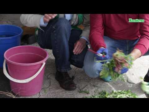 Жидкое органическое удобрение, трава