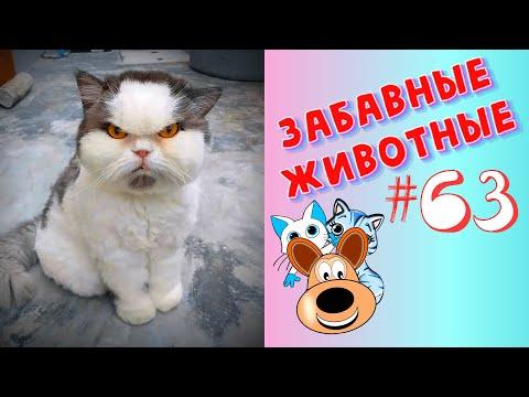 Приколы с Животными #63 / Смешные Животные 2020 / Приколы / Приколы про Животных / Лучшие Приколы