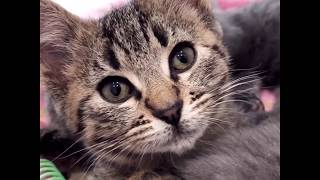 help-these-kittens-find-a-home-tinykittens-com