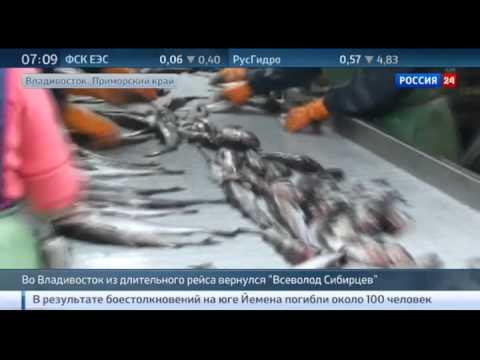 видео: Гигантский плавучий рыбозавод Всеволод Сибирцев вернулся с промысла
