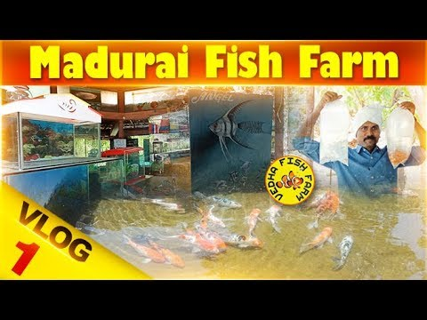 Madurai Fish farm Vlog 1