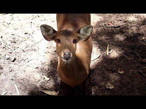 conservation laos animals( tsiaj nyob nplog teb)