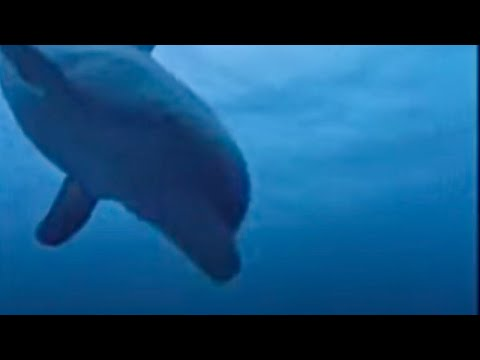 Dolphins and humans - BBC