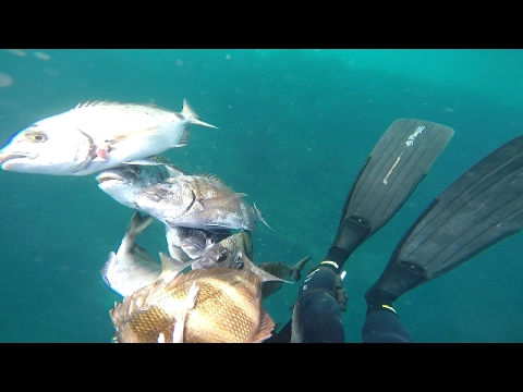 Pesca submarina Tanger (Diki), pèche sous marine Tanger , spearfishing in north Morocco
