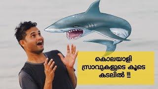 salmiya Marina seaside [with killer shark] \കൊലയാളി സ്രാവുകളുടെ കൂടെ കടലിൽ 🦈🦈🦈