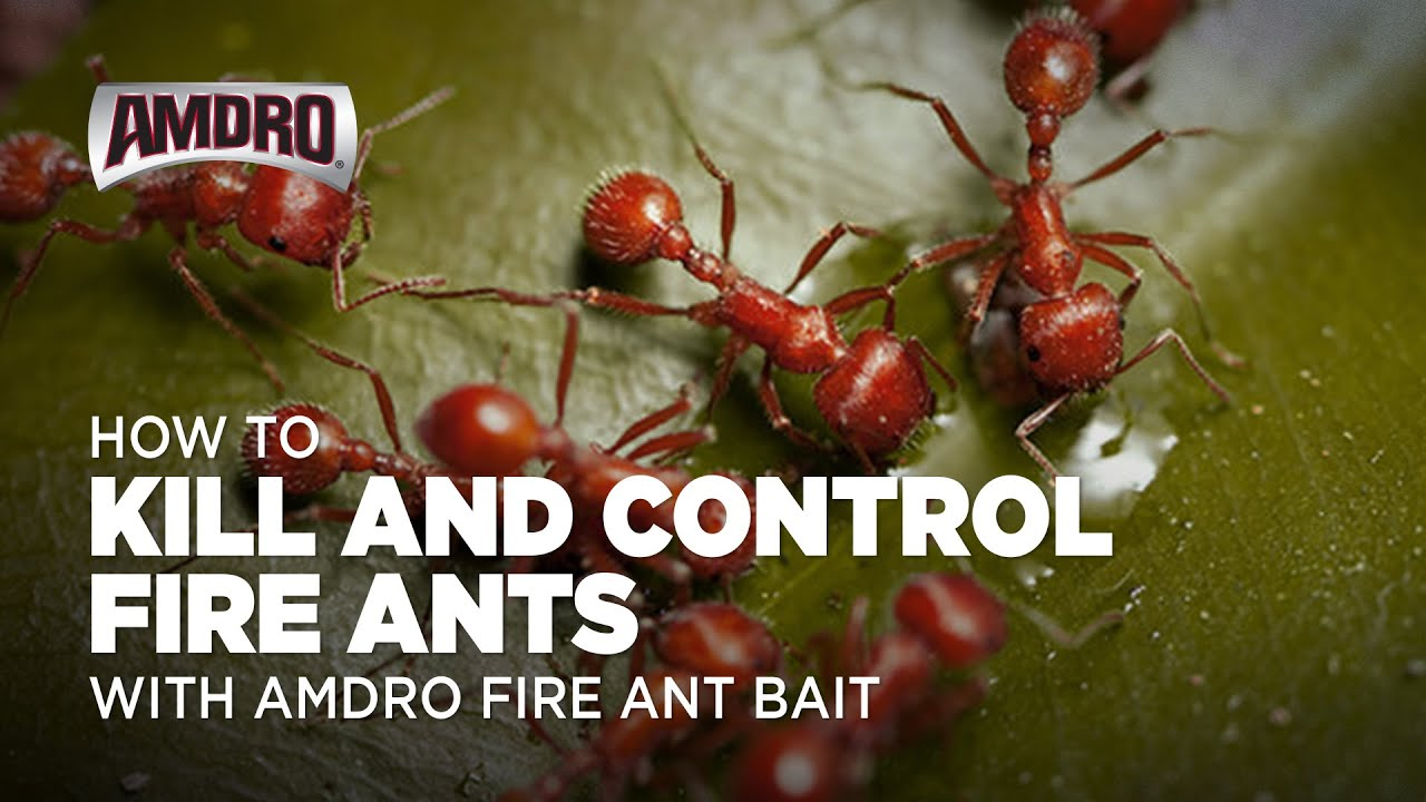 what will really kill fire ants
