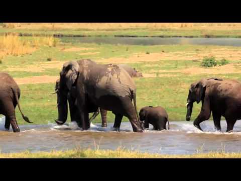 Zambezi Magic   Baines River Camp