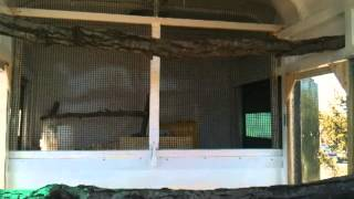 Horse Trailer To Chicken Coop Conversion