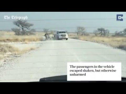 Rhino VS Toyota Hilux