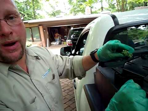 Pest Control VA - A Typical Mice Pest Control Visit In Virginia