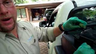 Pest Control VA  A Typical Mice Pest Control Visit In Virginia