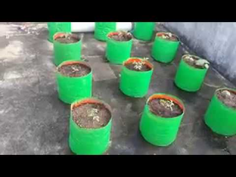 Maadi Thottam Organic Terrace Garden Kanchipuram Youtube