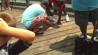 Stingray Caught (and then released) on VA Beach Fishing Pier, July 2011