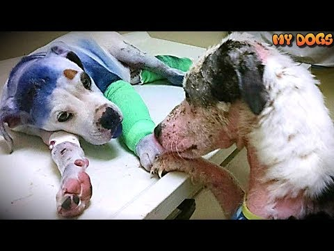 Rescue Dog Comforts His Injured Friend Who's Been Through Hell Just Like Him