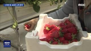 [뉴스데스크]똑똑한 영농, 스마트팜 소득 증대