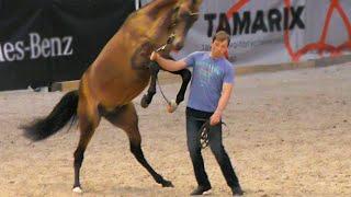 Ахалтекинские жеребцы один лучше другого! Три красавца коня! #лошади выставка #ИППОсфера 2019