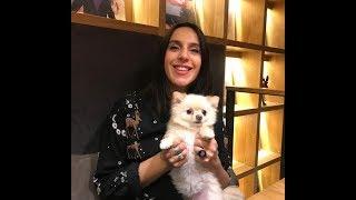 Любимые собаки знаменитостей: фото и видеоподборка