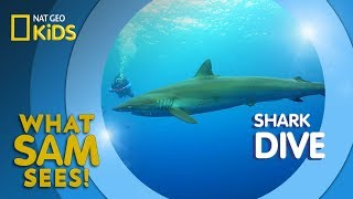 Shark Dive | What Sam Sees