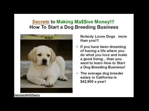 How can I start a dog breeding program?