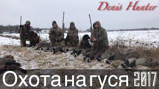 Охота на гуся в Канаде 2017