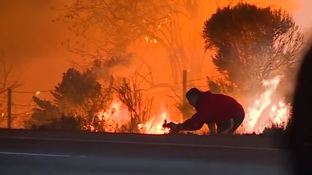 man-jumps-out-of-car-to-rescue-wild-rabbit-from-raging-californian-wildfires