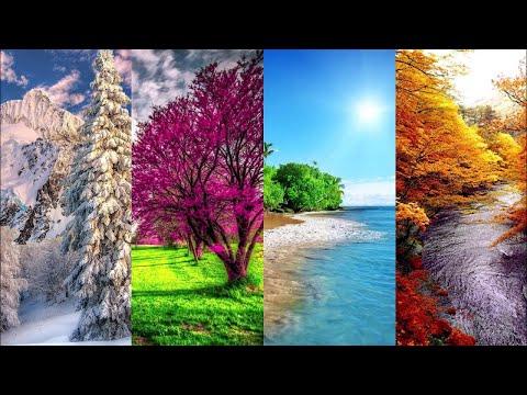Сборник - Времена года. Музыка Сергея Чекалина. Seasons. Music By Sergey Chekalin.