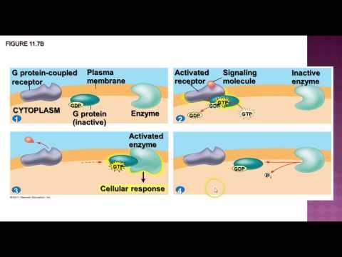 AP Biology - Cell Communication