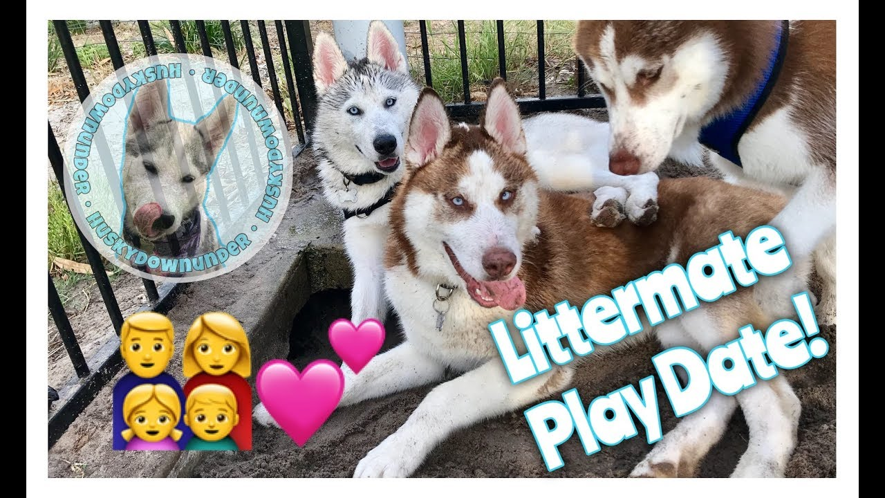 Littermates pet dating app